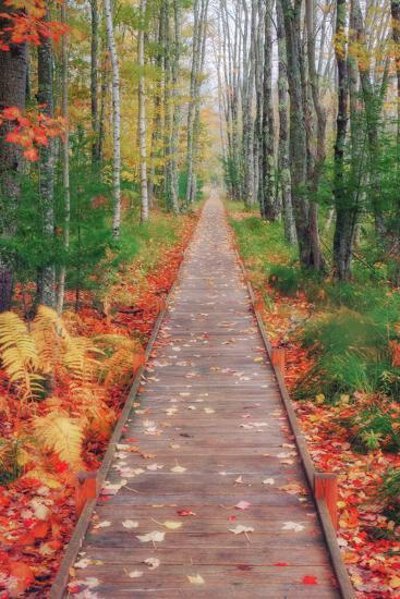 Wild Garden of Acadia Path-Vincent James-Photographic Print