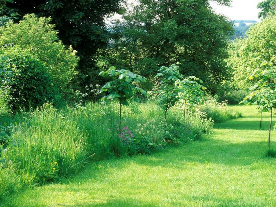 Wild Garden with Young Large Leaf Lime Tree Planted Amongst Long Grass and Wildflowers-Lynn Keddie-Photographic Print