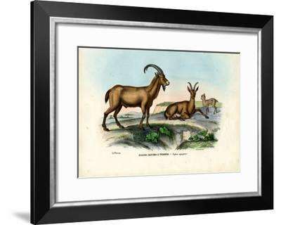 Wild Goat, 1863-79-Raimundo Petraroja-Framed Giclee Print