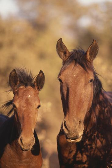 Wild Horse and Colt-DLILLC-Photographic Print