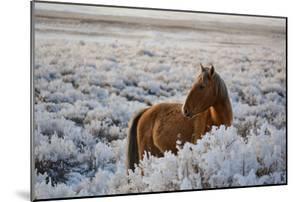 Wild Horse at Mono Lake