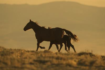 Wild Horse Mother and Foal-DLILLC-Photographic Print