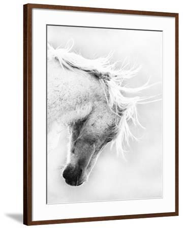 Wild Horse / Mustang Shaking Head and Mane, Adobe Town Herd Area, Southwestern Wyoming, Usa-Carol Walker-Framed Photographic Print