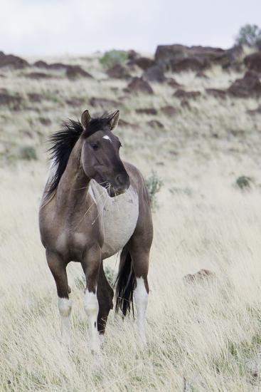 Wild Horse, Steens Mountains-Ken Archer-Photographic Print