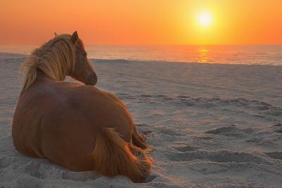 Wild Horse Sunrise-Image by Michael Rickard-Photographic Print
