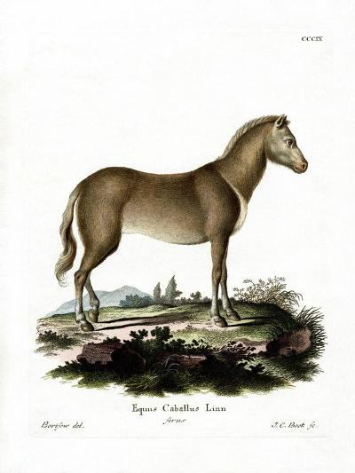 Wild Horse--Giclee Print