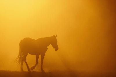 Wild Horse-DLILLC-Photographic Print