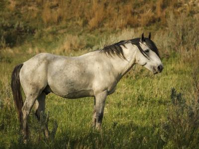 Wild Horse-Galloimages Online-Photographic Print