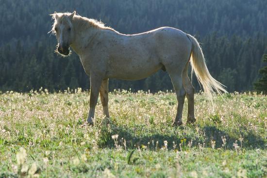 Wild Horse--Photographic Print