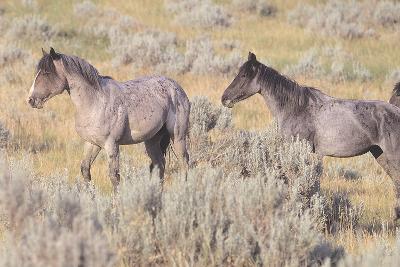 Wild Horses 10-Gordon Semmens-Photographic Print
