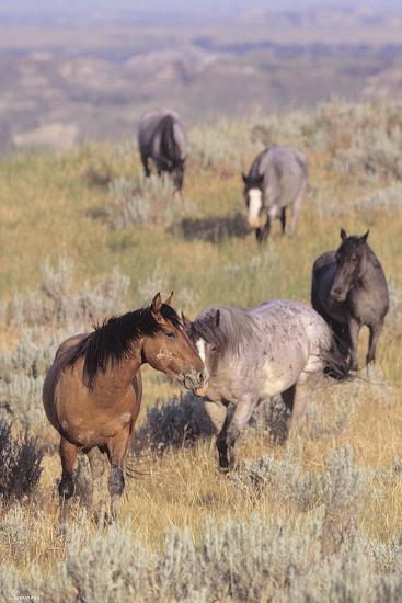 Wild Horses 13-Gordon Semmens-Photographic Print