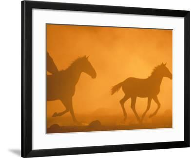 Wild Horses Cantering--Framed Photographic Print