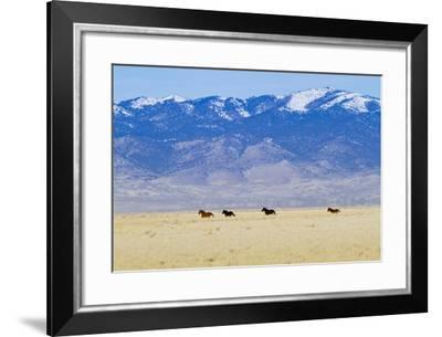 Wild Horses Galloping in Nevada-Sergio Ballivian-Framed Photographic Print