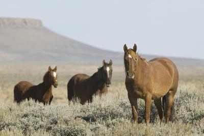 Wild Horses on Prairie-DLILLC-Photographic Print