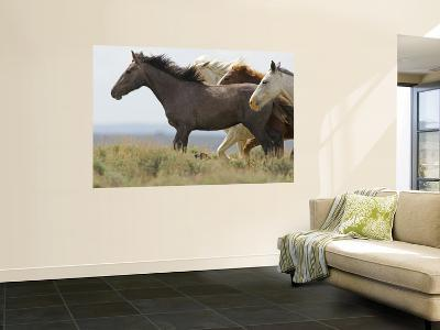 Wild Horses Running, Carbon County, Wyoming, USA-Cathy & Gordon Illg-Wall Mural