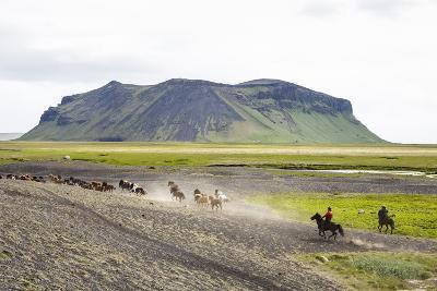 Wild Horses Running, South Iceland, Iceland, Polar Regions-Yadid Levy-Photographic Print
