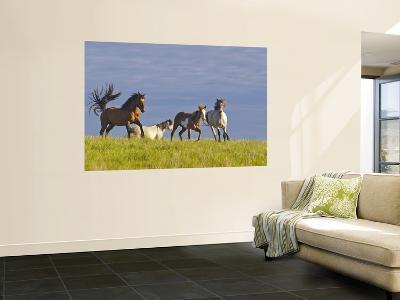 Wild Horses Running, Theodore Roosevelt National Park, North Dakota, USA-Chuck Haney-Wall Mural