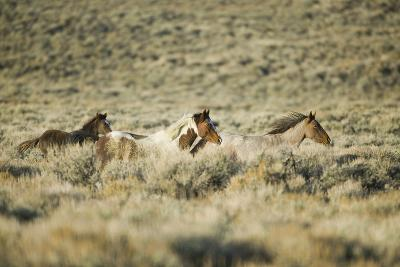 Wild Horses Running-DLILLC-Photographic Print