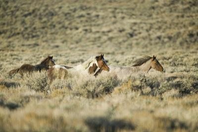 https://imgc.artprintimages.com/img/print/wild-horses-running_u-l-pzreb80.jpg?p=0