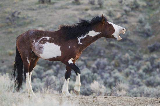 Wild Horses. Steens Mountains, Oregon-Ken Archer-Photographic Print