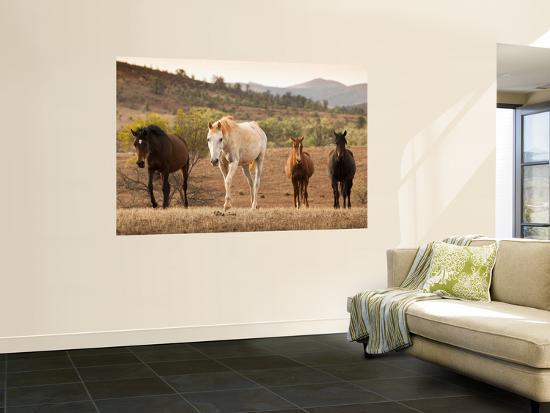 Wild Horses-John Sones-Giant Art Print