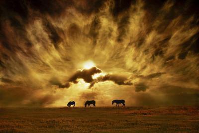 Wild Horses!-Adrian Campfield-Photographic Print