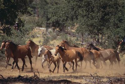 https://imgc.artprintimages.com/img/print/wild-horses_u-l-pzr94w0.jpg?p=0