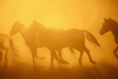 Wild Horses-DLILLC-Photographic Print