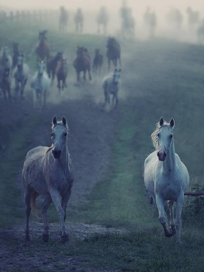 Wild Horses-conrado-Photographic Print