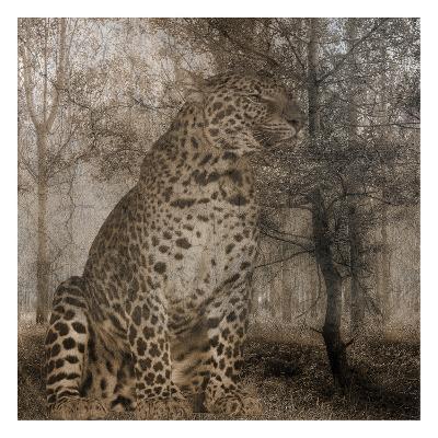 Wild Jungle 1-Sheldon Lewis-Art Print