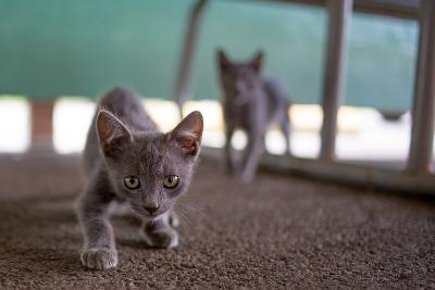 Wild Kittens Approach a Camera with Caution-Ben Horton-Photographic Print