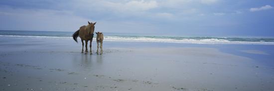 Wild Mare and Foal on the Beach North of Corolla-Stephen Alvarez-Photographic Print