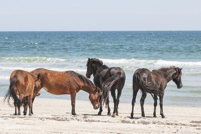 Wild Mustangs in Currituck National Wildlife Refuge, Corolla, Outer Banks, North Carolina-Michael DeFreitas-Photographic Print