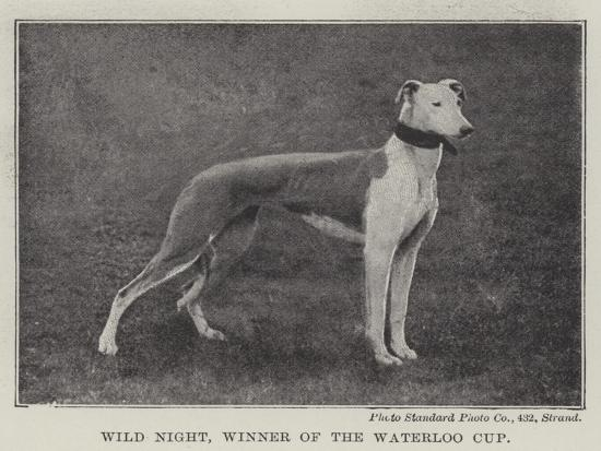 Wild Night, Winner of the Waterloo Cup--Giclee Print