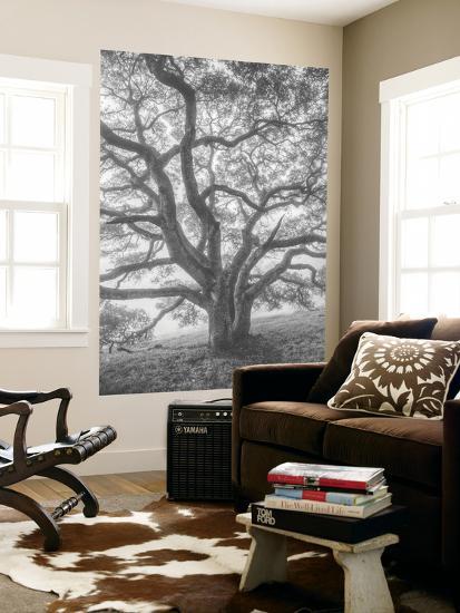 Wild Oak Tree in Black and White Portait, Petaluma, California-Vincent James-Wall Mural