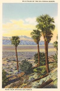 Wild Palms, Palm Springs