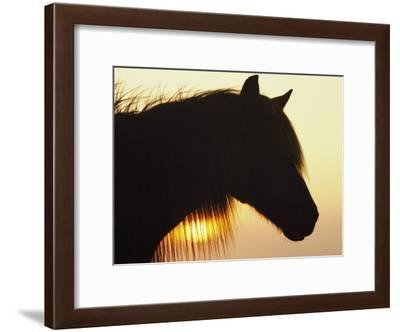 Wild Pony in Silhouette at Twilight-James L. Stanfield-Framed Photographic Print