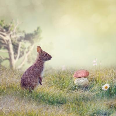 Wild Rabbit Standing Up in the Grass-Svetlana Foote-Photographic Print