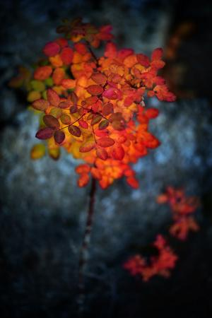 https://imgc.artprintimages.com/img/print/wild-rose-bush-in-october_u-l-q1guj9o0.jpg?p=0