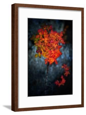 Wild Rose Bush in October-Ursula Abresch-Framed Photographic Print
