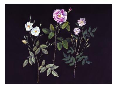 Wild Roses-Jane Kim-Premium Giclee Print
