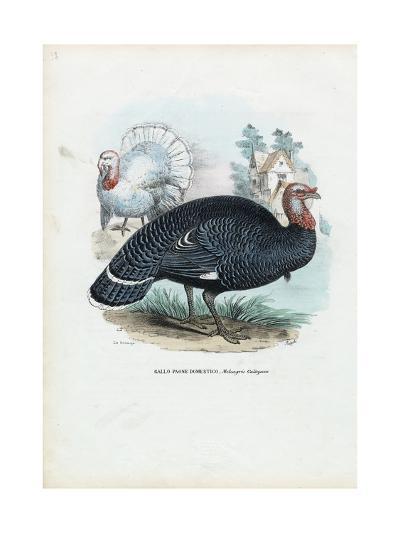 Wild Turkey, 1863-79-Raimundo Petraroja-Giclee Print