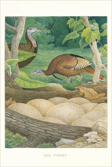 Wild Turkey Nest and Eggs--Art Print