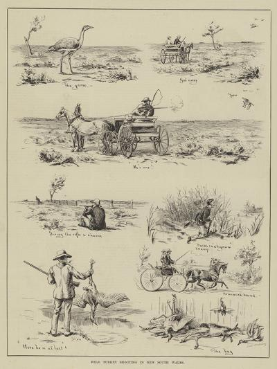 Wild Turkey Shooting in New South Wales--Giclee Print