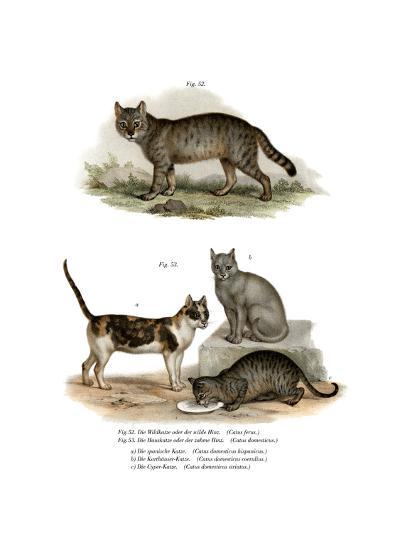 Wildcat, 1860--Giclee Print