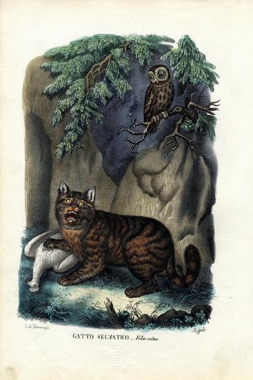 Wildcat, 1863-79-Raimundo Petraroja-Giclee Print