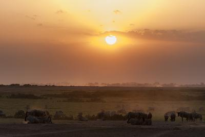 Wildebeest and Common Zebras, Equus Quagga, Grazing During Sunset-Sergio Pitamitz-Photographic Print