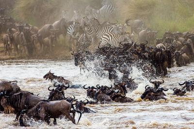 Wildebeests are Crossing Mara River. Great Migration. Kenya. Tanzania. Masai Mara National Park. An-GUDKOV ANDREY-Photographic Print