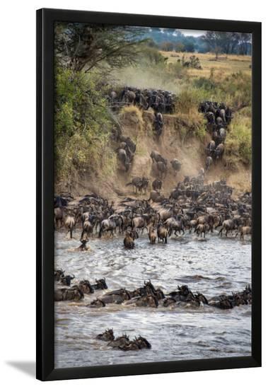 Wildebeests Crossing Mara River, Serengeti National Park, Tanzania--Framed Photographic Print