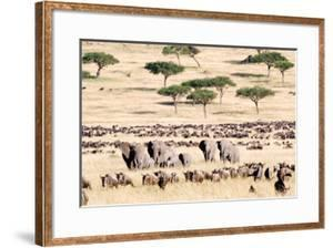 Wildebeests with African Elephants (Loxodonta Africana) in a Field, Masai Mara National Reserve